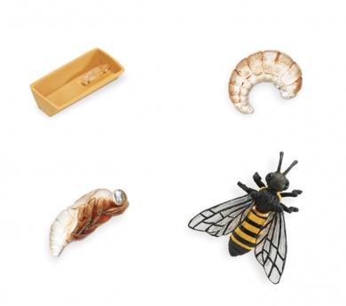 Figuras ciclo de la vida abeja