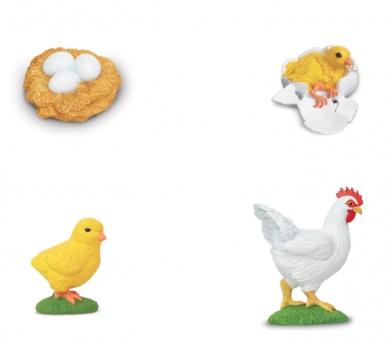 Figuras ciclo de la vida de una gallina