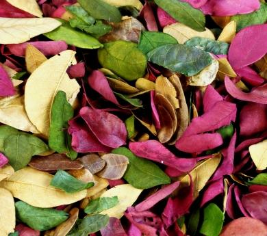 Hojas secas pequeñas y variadas 50 g.