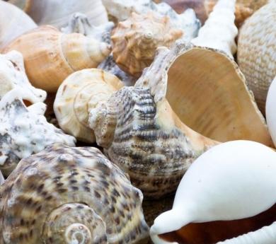 Conchas y caracoles de mar variados 500 g.