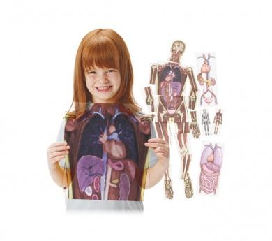 Láminas translúcidas del cuerpo humano y sus órganos