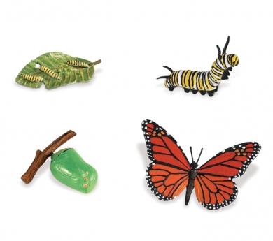 Figures cicle de la vida papallona monarca