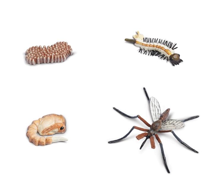 Figures cicle de la vida mosquit