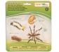 Figuras ciclo de la vida mosquito