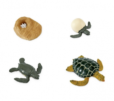 Figures cicle de la vida de la Tortuga