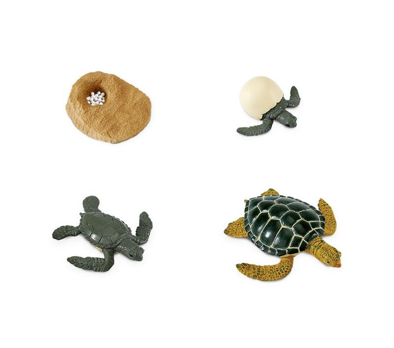 Figuras Ciclo De La Vida De La Tortuga