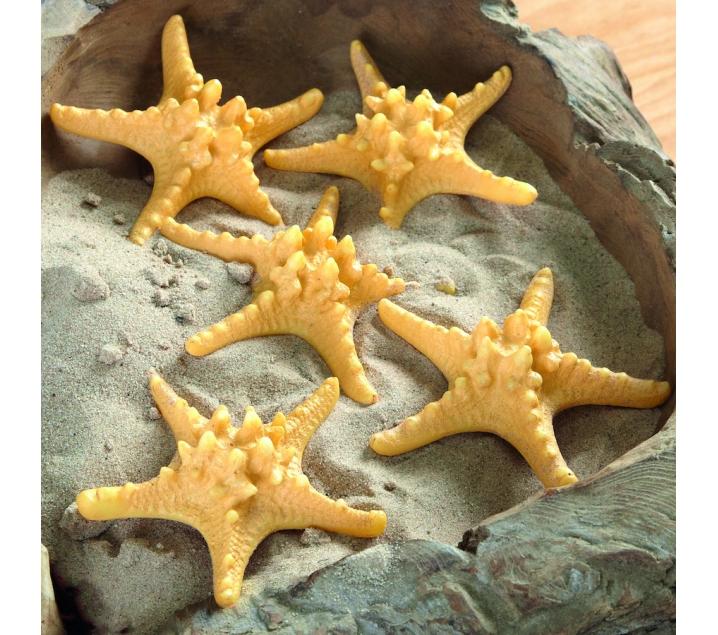 Conjunt de 5 estrelles de mar