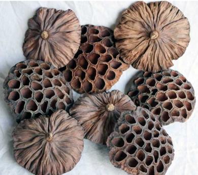 10 futos de loto secos