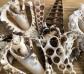 20 conchas de mar rebanadas