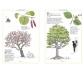 cat Inventario ilustrado de los árboles