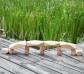 Gemmes de fusta naturals