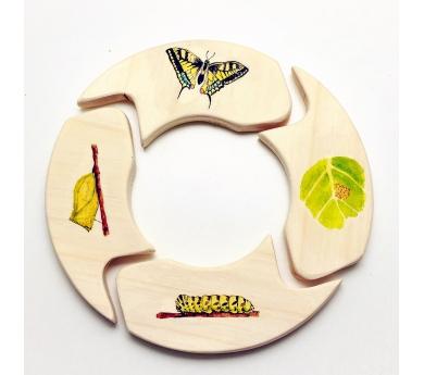 Puzzle ciclo de la mariposa