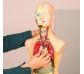 Maqueta anatómica con 11 piezas desmontables