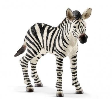 Cria de zebra