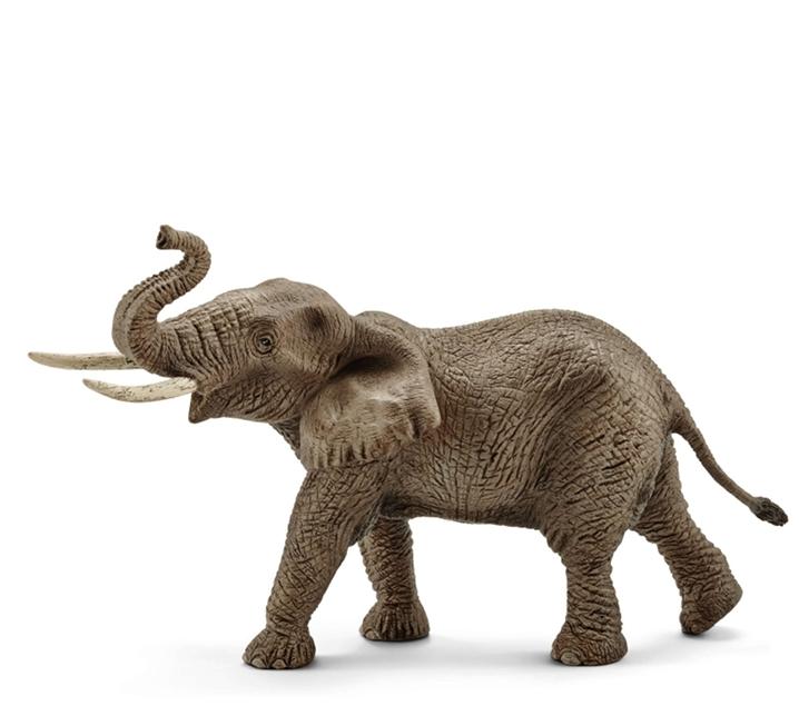Elefant africà mascle