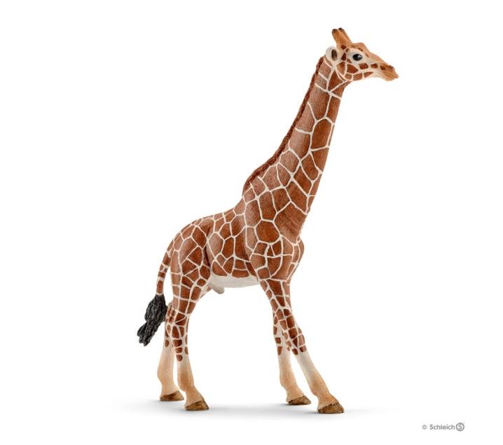 Girafa mascle