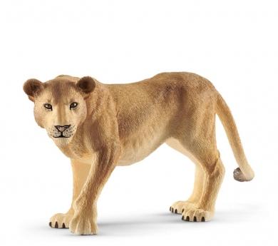 Lleona africana