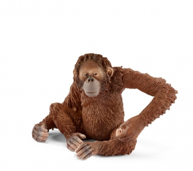 Orangután hembra