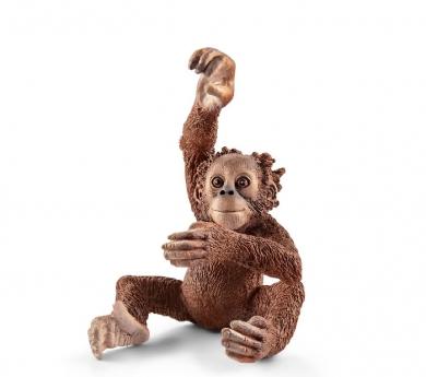 Cria orangután