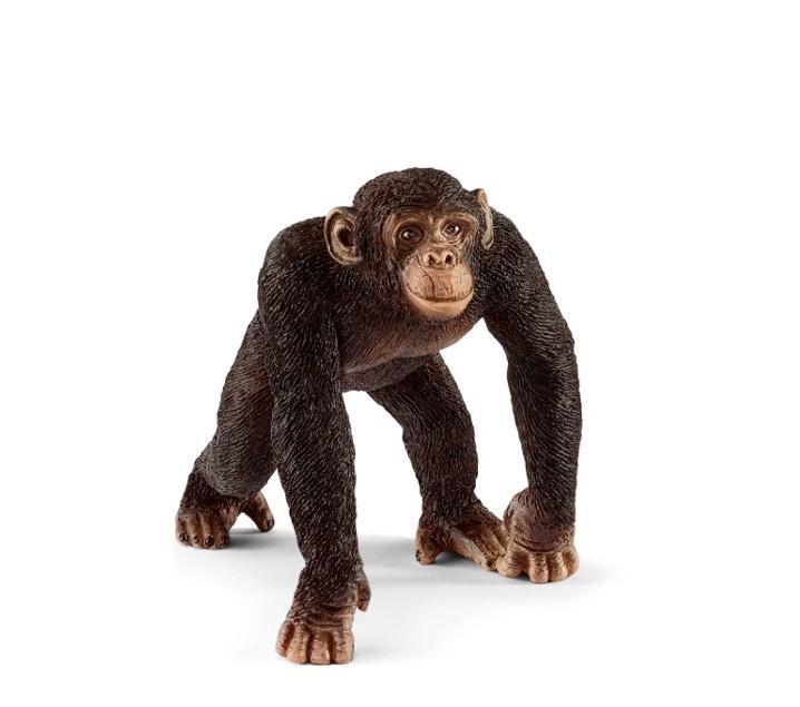 Orangutan femella