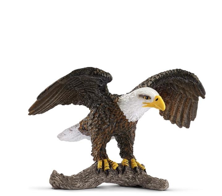 Àguila americana
