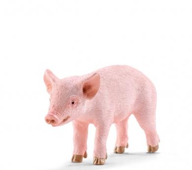 Cria de porc