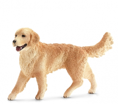 Perro Golden retriever