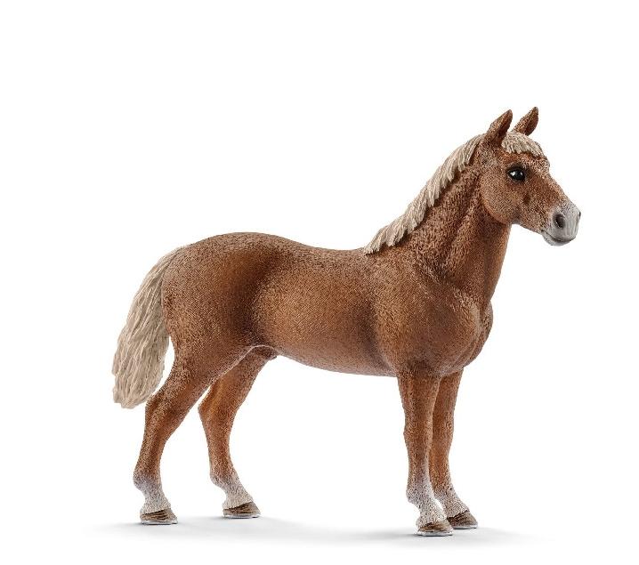 Cavall àrab marró