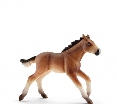 Poltre Mustang