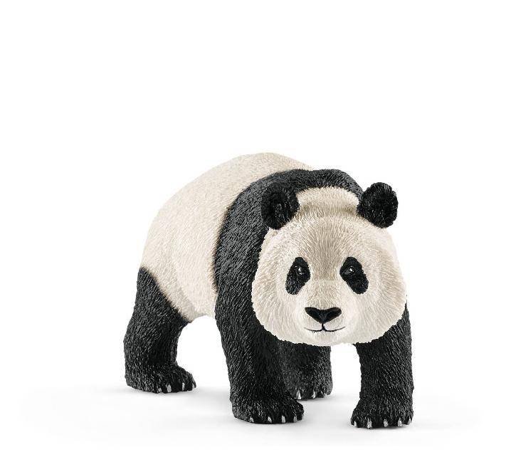Oso panda macho
