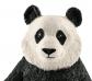 Oso panda hembra