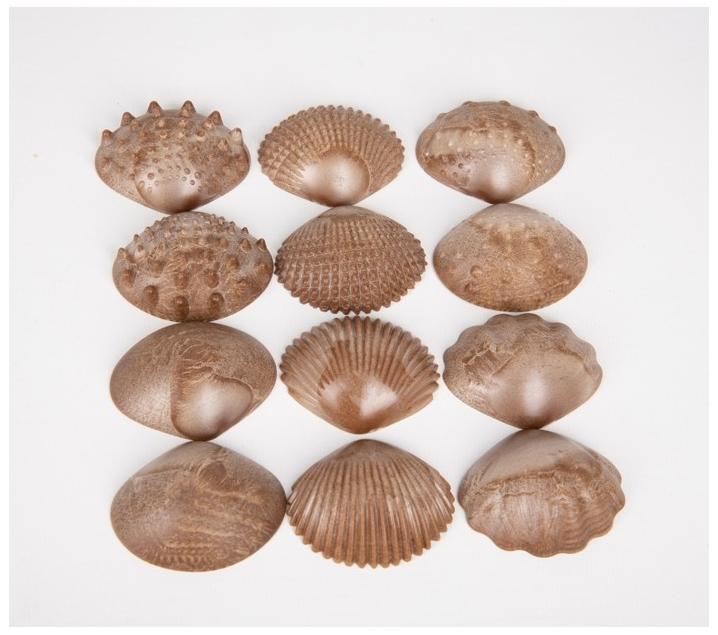 Conchas ecológicas sensoriales