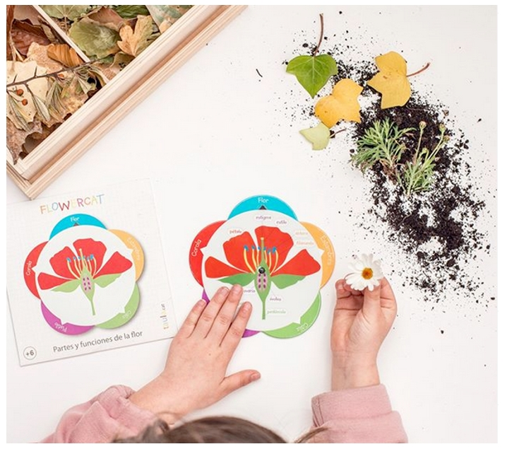 Disc giratori parts i funcions de la flor