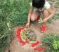Joc de propostes Land Art