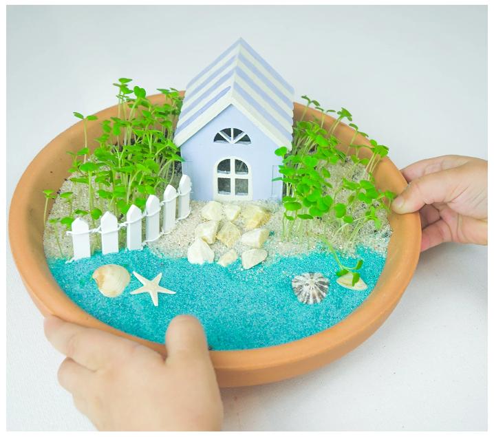 Crea una playa en miniatura con plantas reales