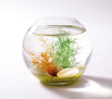 Surtido de conchas mágicas con algas