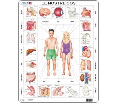 Puzzle del Cuerpo humano