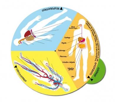 Disco giratorio el cuerpo humano