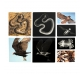 13 radiografies d'animals