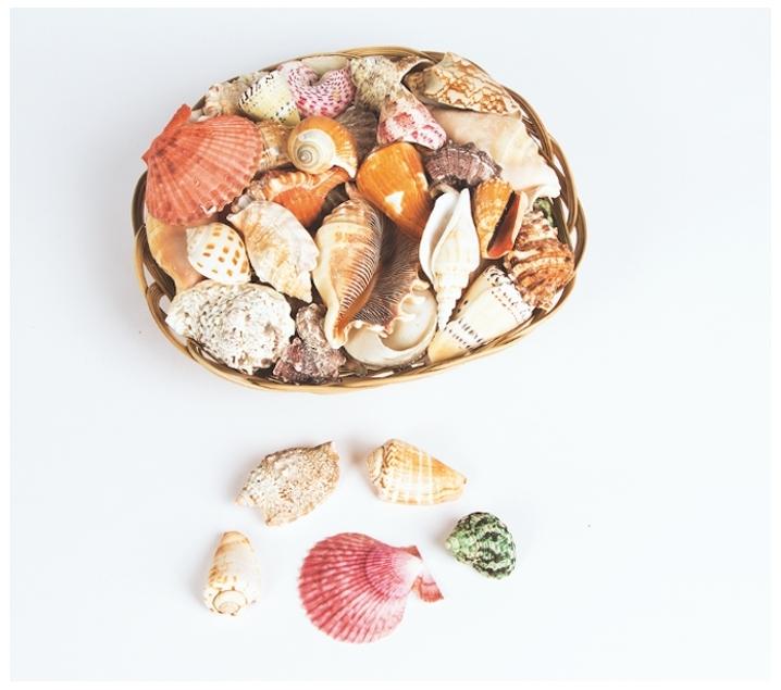 Conchas y caracoles naturales