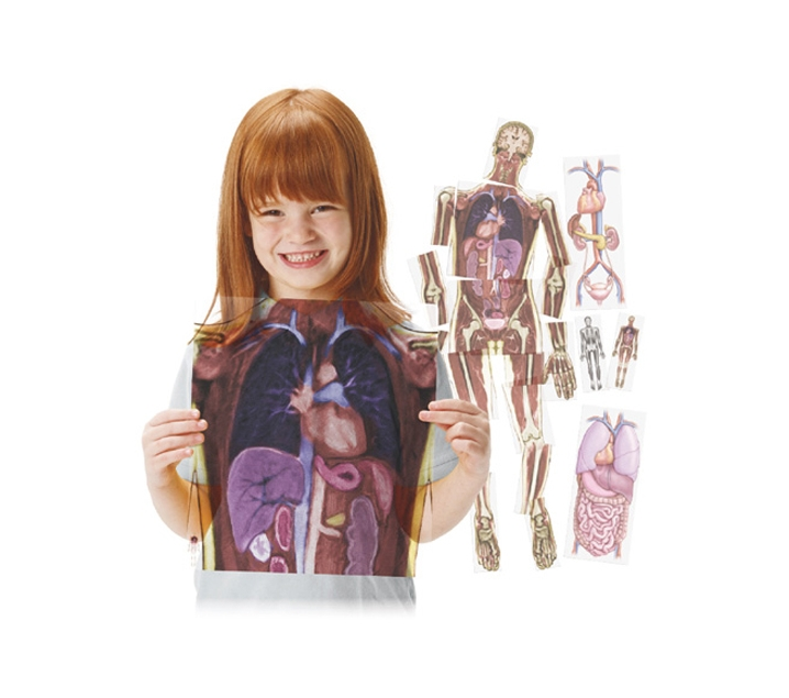 Làmines translúcides del cos humà i els seus òrgans