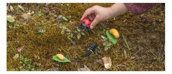 Botánica y fauna